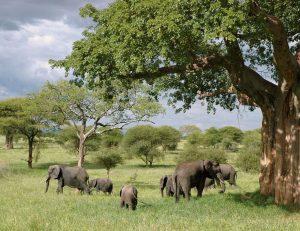 elephant-289134_1280