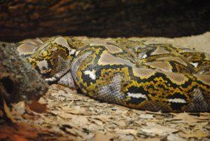 snake-676868_1280
