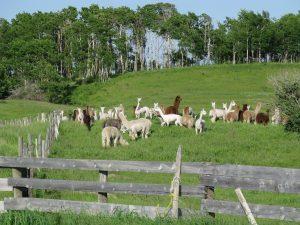 farm-698016_1280