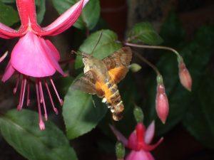 hummingbird-974015_1280