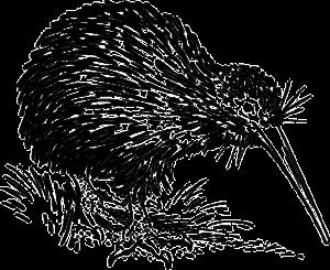 kiwi-153466_640