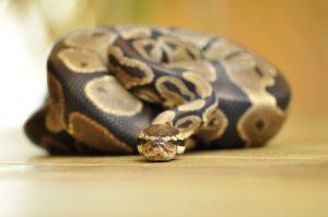 snake-358245_1280