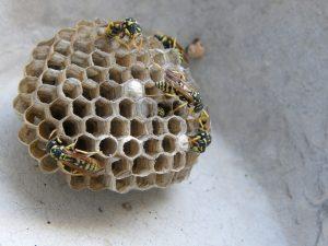 wasps-nest-962323_1280