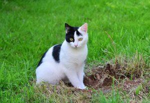 cat-1446010_640