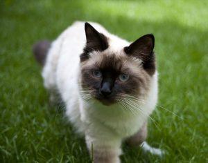 cat-439129_640