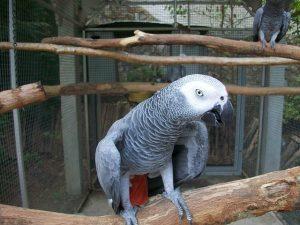 parrot-964969_640