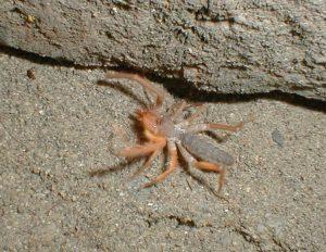 Wind_scorpion