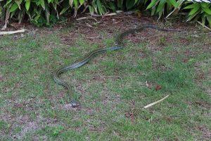 snake-183368_640