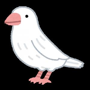 bird_jushimatsu_white