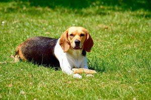 dog-1258102_640