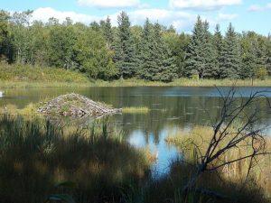lake-458532_640