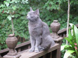 cat-762959_640