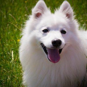 dog-1346484_640