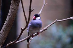 java-sparrow-231228_640