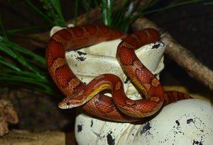 snake-777197_640